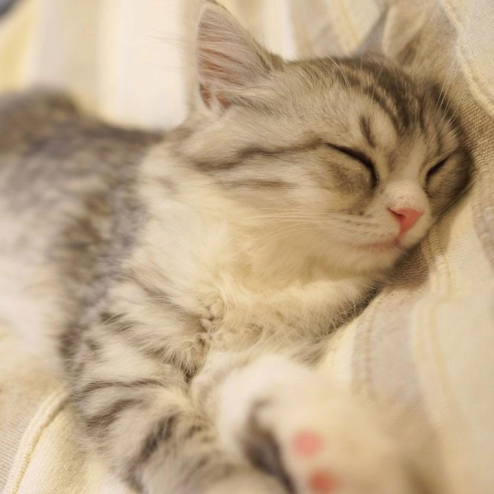 休養も大切な特効薬